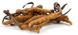 Cordyceps Sinensis de forma natural