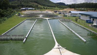 Tanque de agua donde se cosecha la espirulina. espirulina tabletas