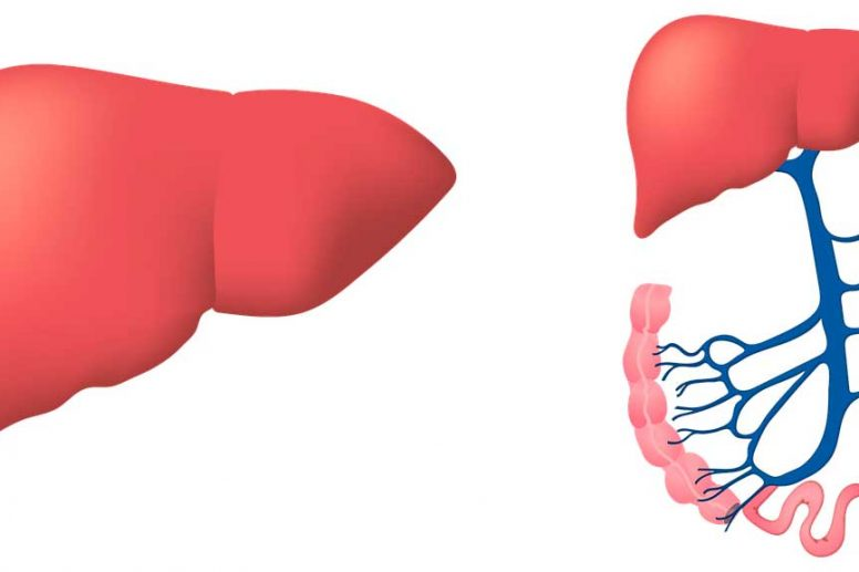 Ayuda a tu Hígado